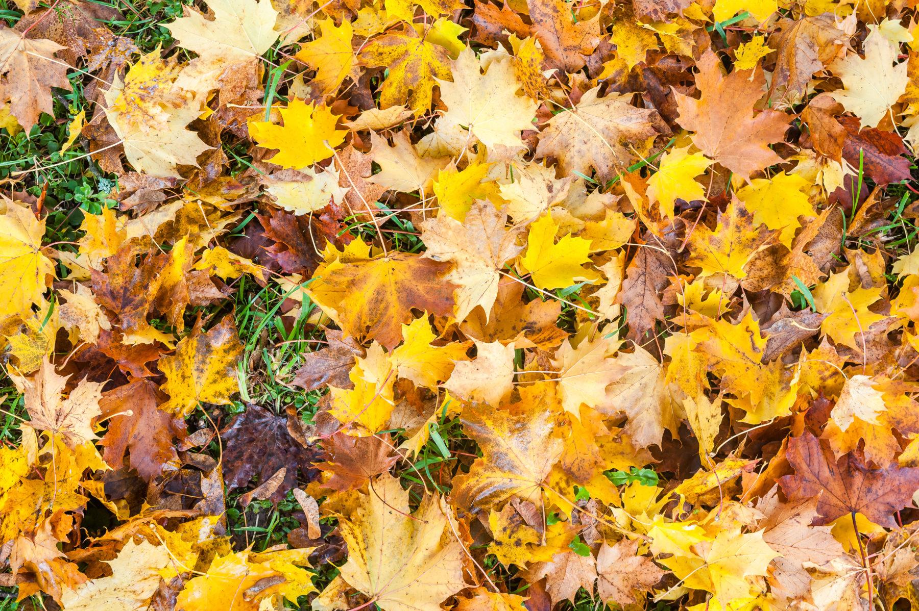 Ohne Zuordnung Herbst Blätter Auf Dem Boden Shutterstock 447164707